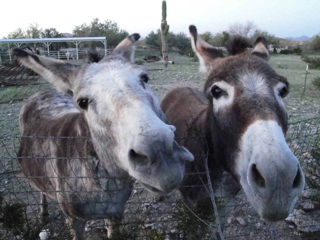Donkey Photos